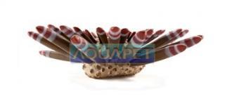Enfeite de Resina Ourico gr Soma Fish