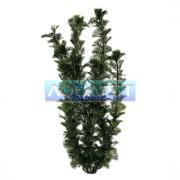 Planta Plastica  Cabomba 30cm Tetra