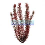 Planta Plastica Foxtail 61cm Tetra