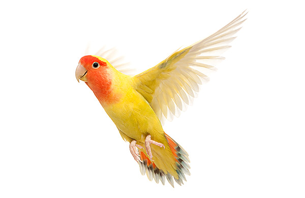 produtos para aves
