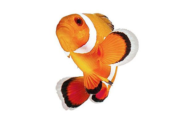 produtos para peixes