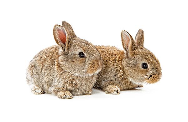 produtos para roedores